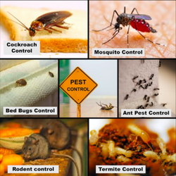 White Ant Control Adelaide